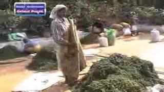 DDK Bangalore Krishidarshan kannada Programme (BC) telecast on 12/02/2013