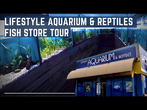 Fish Store Tour - Lifestyle Aquarium & Reptiles Bundoora