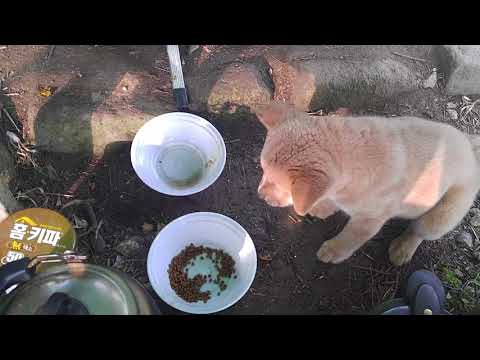 해바라기섬 황도의 아침은 밥달라고 아우성입니ㄷ