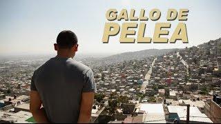 Gallo de Pelea - La Historia de Antonio Romero
