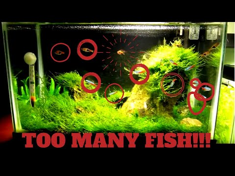 Adding Fish To Aquarium: 5 Gallon Tank With Too Many Fish!!