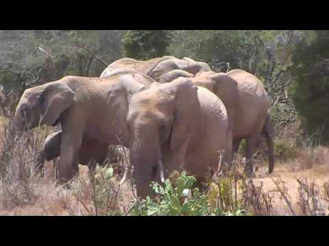 Elephant family visit the Africa River cam. 14 February 2017