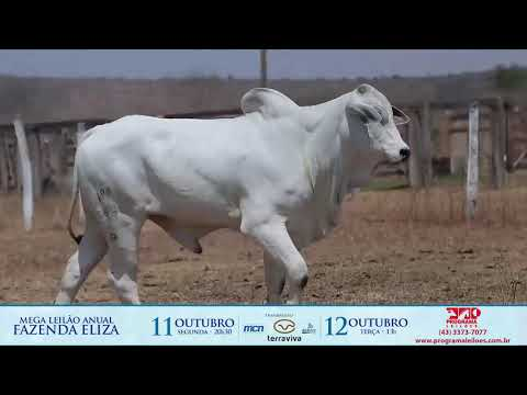 LOTE 84A