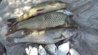 2 Часть . Рыбалка все лучше , Сазан все крупнее .Река Дон