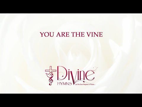 You Are The Vine; We Are The Branches