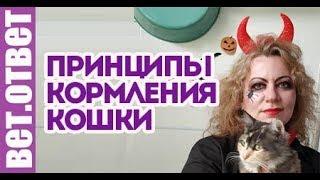 Основные принципы кормления кошки. Ветеринарный Хэллоуин.