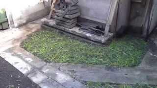 Как я посеял газонную траву. Газонная трава(Посеял поздно, что вырастет посмотрим !, 2015-05-15T19:14:08.000Z)