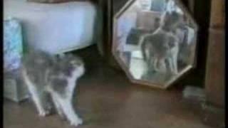 (ishikarose & Oyeh2) Funny Cats
