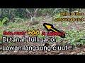 Mikat Burung Kutilang Tanpa Pulut Mikat Kutilang Di Tanah Full Gacor  Mp3 - Mp4 Download