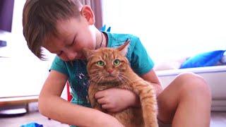 سينيا وقطته يلهون. مجموعة من أشرطة فيديو للأطفال