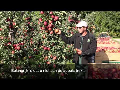 Instructievideo pluk appels en peren