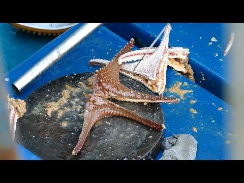 Cutting Live Starfish Seastar at Sai Kung seafood market - Hong Kong