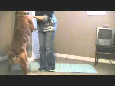 Strengthening the Dog's Hind End   Exercise