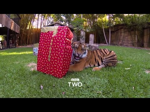Merry Christmas from BBC Two