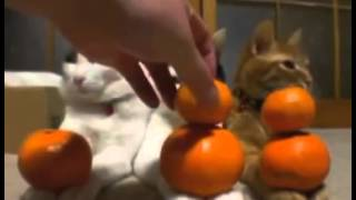 Прикольные и смешные коты и кошки. Подборка. Часть 2