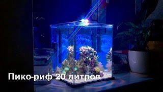 Пико риф 20 литров   Pico reef 20 L(Пико риф 20 литров   Pico reef 20 L Заказать изготовление и обслуживание морского аквариума у меня:http://www.aquades.in.ua/p/bl..., 2015-11-30T16:05:47.000Z)
