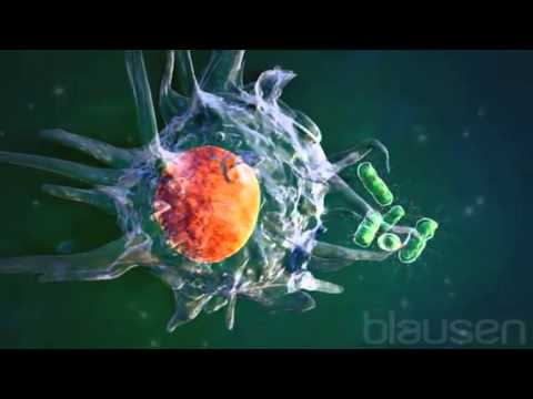 Medicine, Biomedicine, and Medical Biology  Update's videos