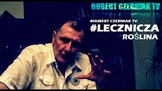 Hubert Czerniak TV #6 - #Roślina (nie tylko lecznicza) - MM. #Eliksir zdrowia #Włączamy myślenie!