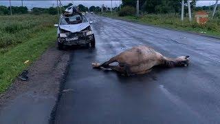 ДТП с участием машины и лошади произошло сегодня рано утром в Борисовке