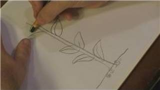 How to Draw Flowers : How to Draw Corn Stalks