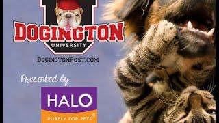 Dogington University:  Holiday Safety with Tracie Hotchner, The Radio Pet Lady