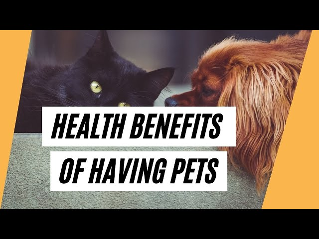 Did You Know That Having Pets Offers A Lot Of Benefits? (Health Benefits Of Having Pets)