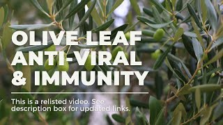 Olive Leaf for Immunity Thumbnail