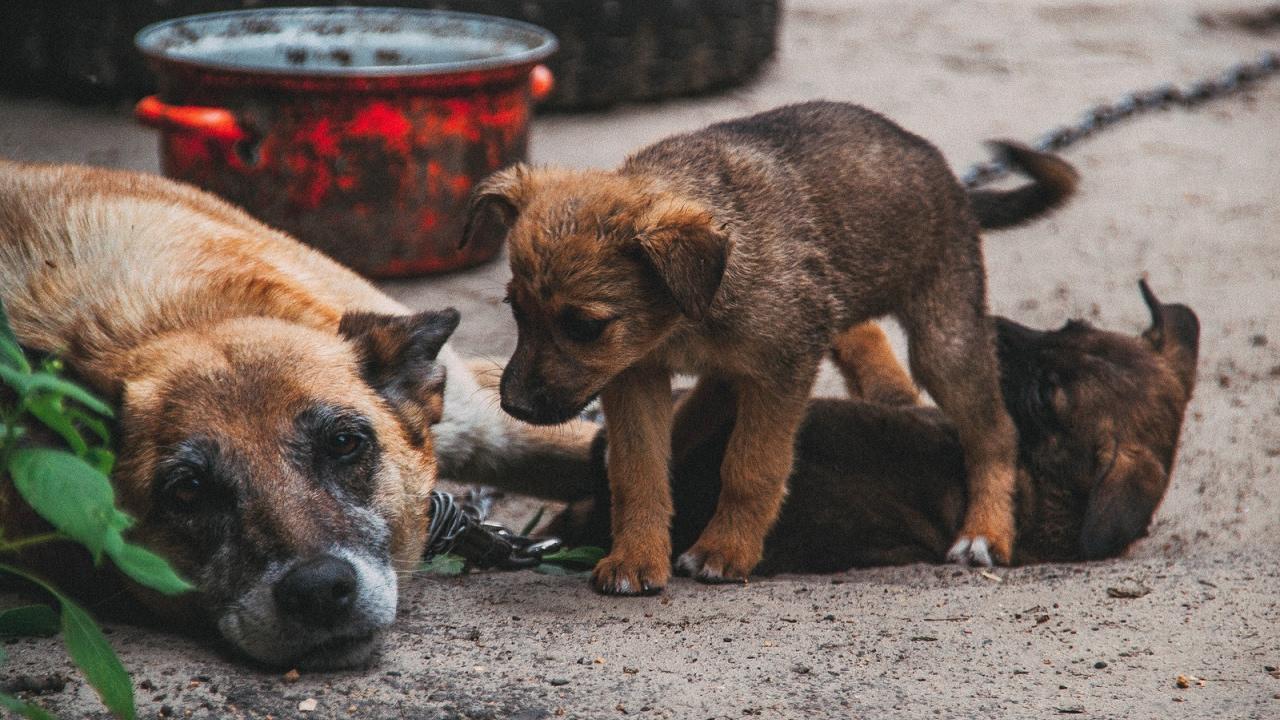 фотки кошек и собак бездомных поднебесной считают