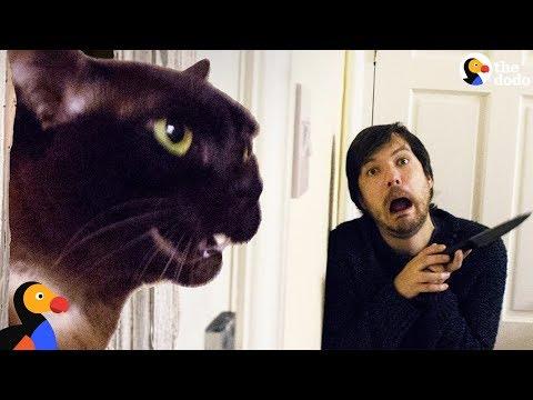 Guy Recreates Movie Scenes With His Cats | The Dodo