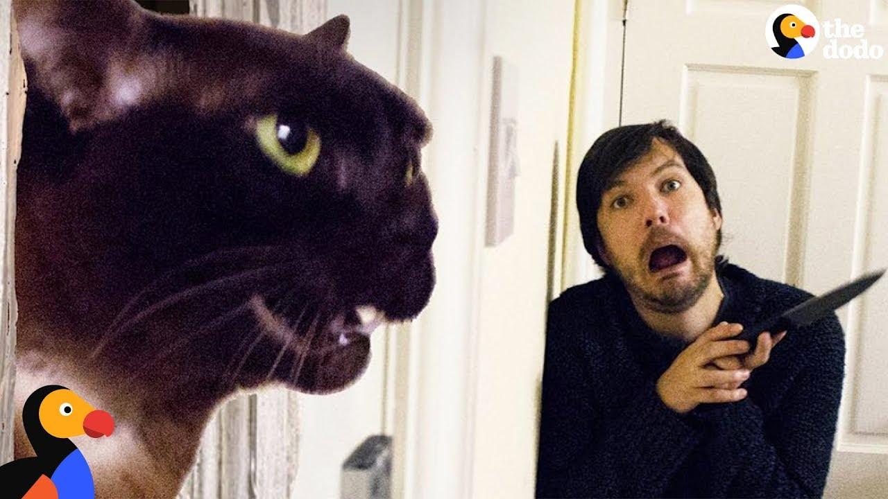 Guy Recreates Movie Scenes With His Cats