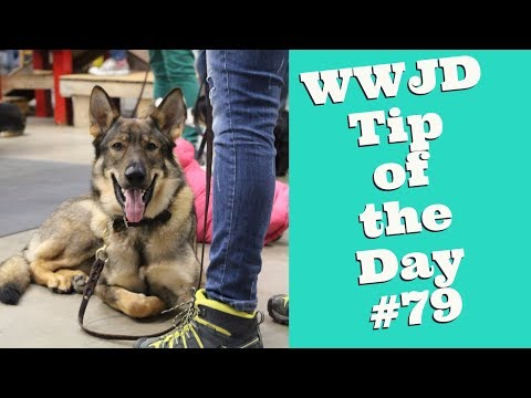 what-would-jeff-do?-dog-training-tip-of-the-day-#79-puppy-biting
