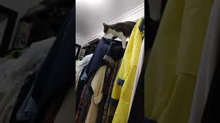 박덕봉 입니다(행거타는 고양이.고양이.고등어냥.개냥이)