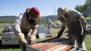 Keep the Hives Alive Primer hi-resolution