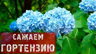 ФАЗЕНДА-2012.08.26 - Фрагмент 1.
