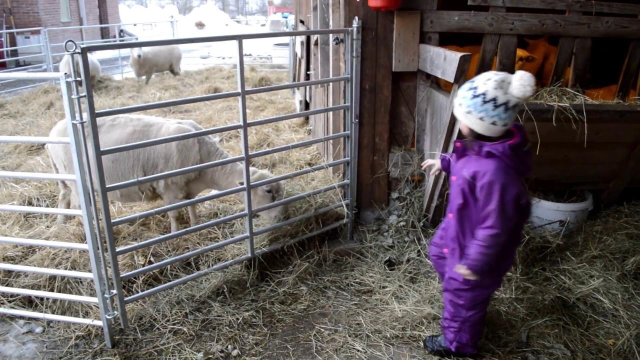 A day in the farm. My little farmer. Farm life. - YouTube