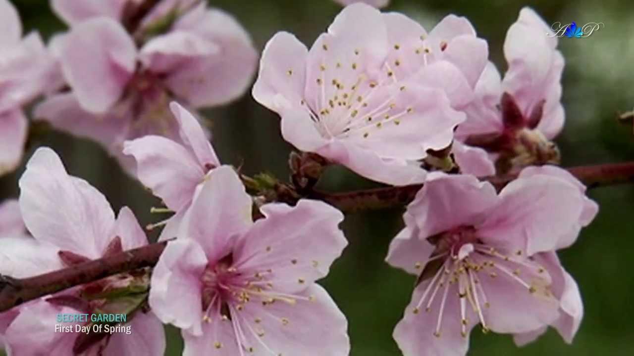 ♡ First Day Of Spring   SECRET GARDEN   YouTube
