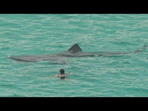 MEGA-SHARKS FILMED BY TOURISTS
