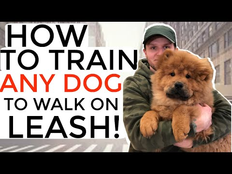 How to train your puppy not to pull on the leash- Dog training with positive reinforcement