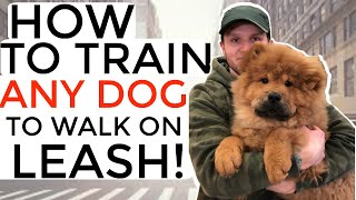 How to train your puppy not to pull on the leash Dog training with positive reinforcement