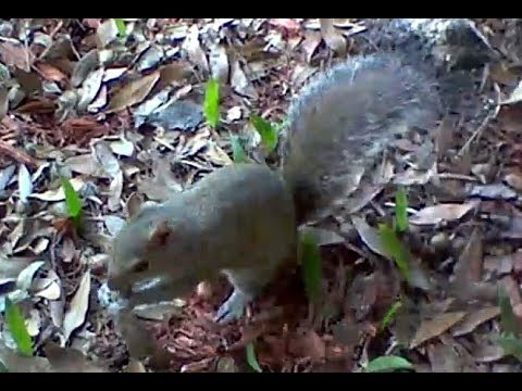 my-longest-squirrel-video-from-blink-xt-wireless-outdoor-security-camera