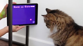 MY CATS Play APP GAMES!