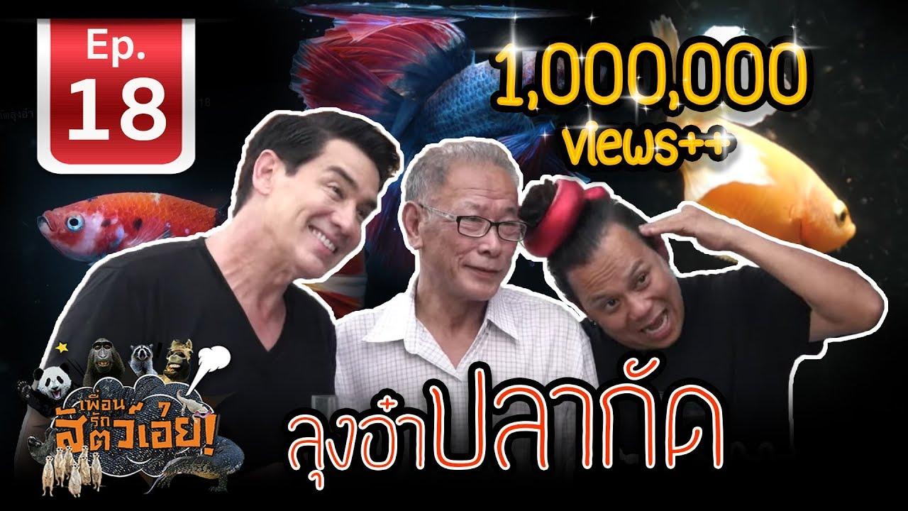 เพื่อนรักสัตว์เอ๊ย - ปลากัดลุงอ๋า [ Goldenbetta in THAILAND ] l EP.18