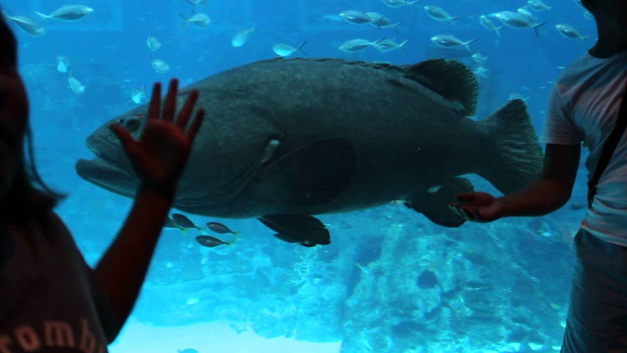 Fish aquarium in sentosa - The Maritime Experiential Museum Resort World Sentosa Singapore S E A Aquarium Mvi 0944 Youtube