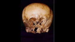 Древний череп поверг учёных в ужас. Науку придётся переписать! Шок сенсация 08.06.2020