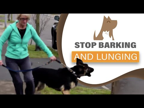 how-to-stop-your-dog-barking/-lunging-at-visitors-&-dogs;-aggression