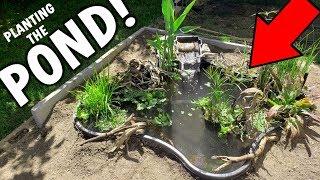 Planting The Backyard DIY Mini Pond // Pond Season 2 Ep. 2