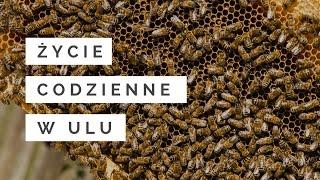 Życie codzienne pszczół