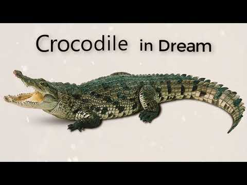 What is the meaning of crocodile in a dream   |  Dreams Meaning and Interpretation