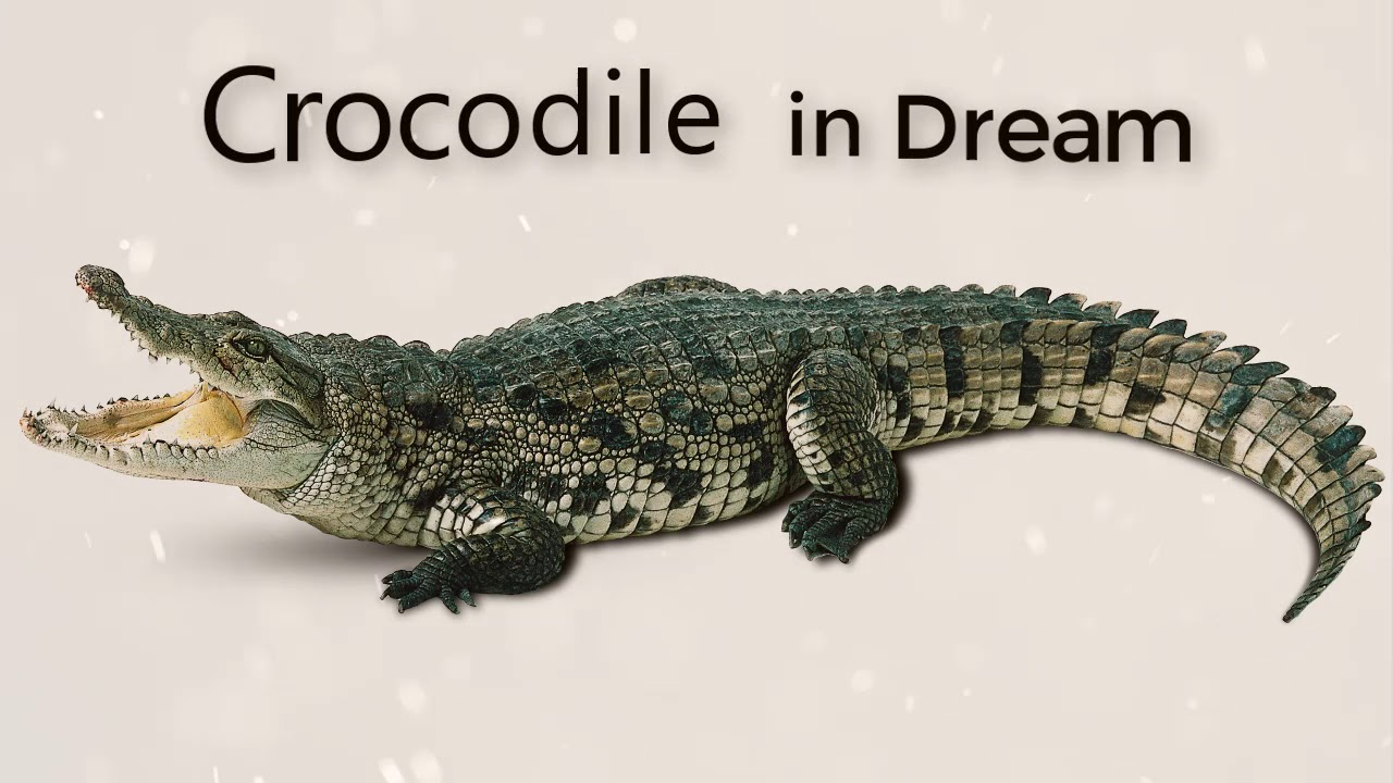 What do crocodiles dream about: interpretations 38