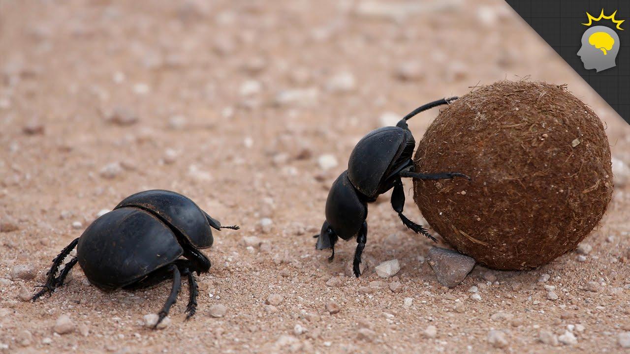 Watch on Beetle Mania